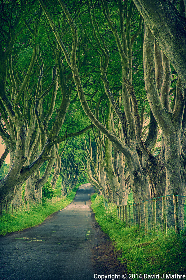 Tree Covered Collin Road in Ballymena, Northern Ireland. (David J Mathre)