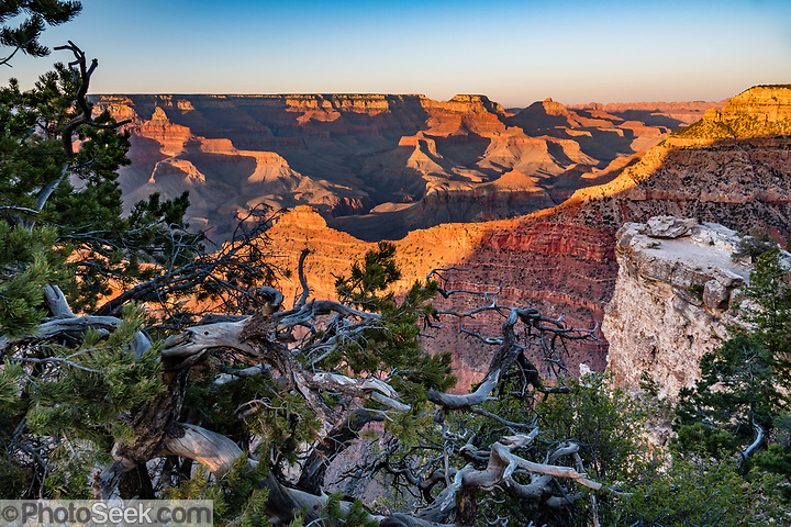 Sunset seen through gnarly pine trees at Mather Point Overlook, Grand Canyon National Park, Arizona, USA. (© Tom Dempsey / PhotoSeek.com)