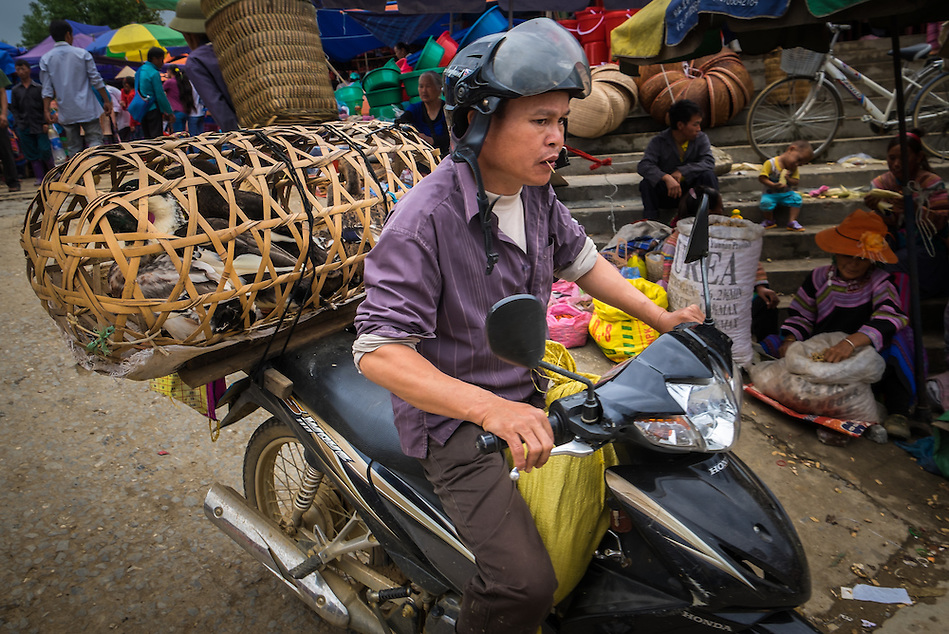 BAC HA, VIETNAM - CIRCA SEPTEMBER 2014:  Vietnamese man riding motorbike at the Bac Ha sunday market, the biggest minority people market in Northern Vietnam (Daniel Korzeniewski)