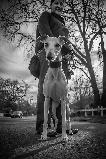 "Veronica Saleh with her Whippet, Andretti, on a morning  Valentines Day walk  in Calistoga   ""Our home is in Palo Alto, though we often stay at our home here in Calistoga."" (Clark James Mishler)"