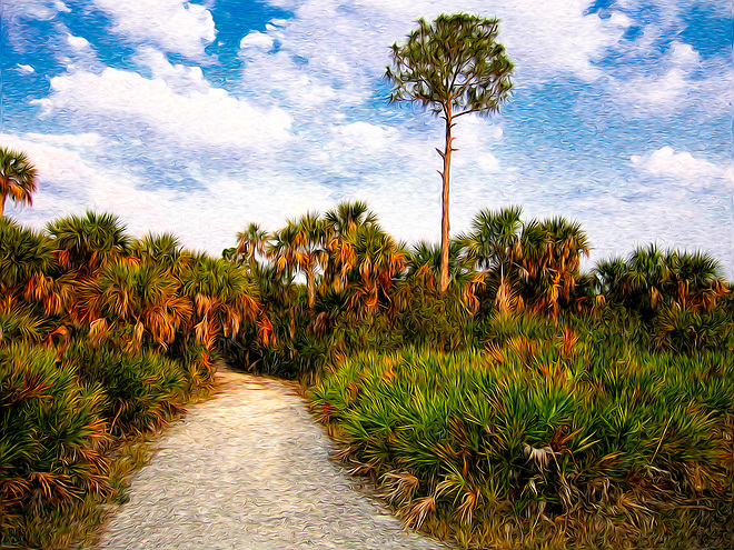 A trail through the palmettos and cabbage palms of Southwest Florida..... (Rich Leighton)
