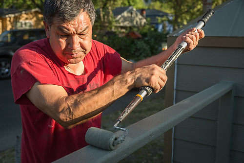Socorro Gallardo paints the fence in front of their home in Calistoga. (Clark James Mishler)