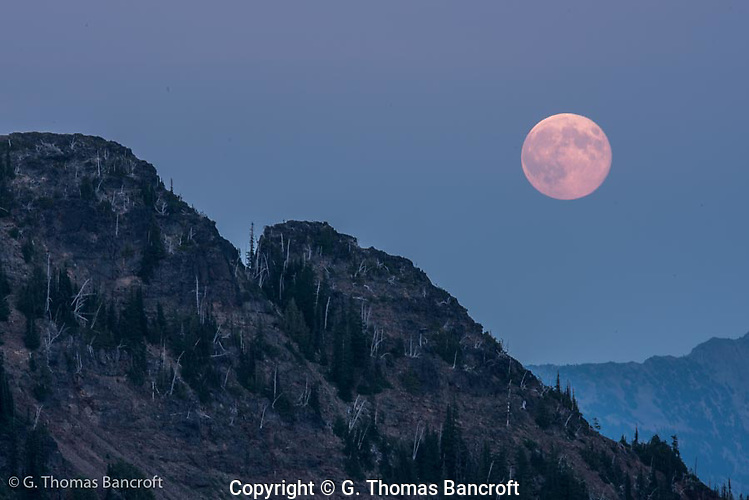 The supper moon rises over a ridge in the William O. Douglas Wilderness. (G. Thomas Bancroft)