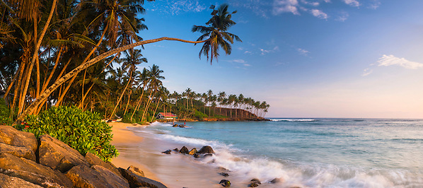 This is a panoramic photo of a palm tree on Mirissa Beach, Sri Lanka, Asia. Mirissa Beach is a popular palm tree lined beach on the South Coast of Sri Lanka.
