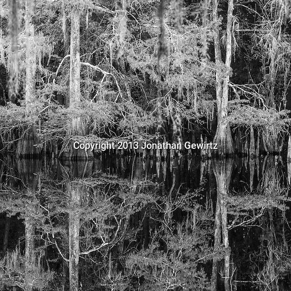 Black & white reflections of the cypress forest on the lake at Ingram Crossing on Fisheating Creek in Florida's Fisheating Creek Wildlife Management Area. (Jonathan Gewirtz   jonathan@gewirtz.net)