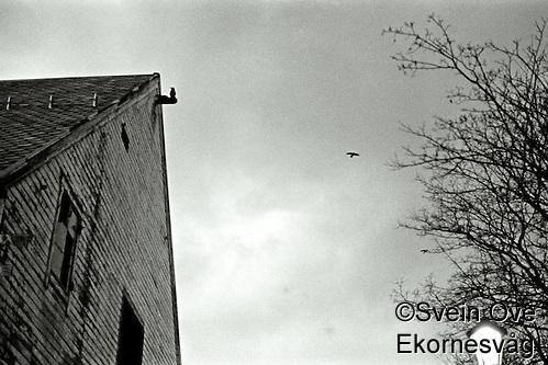 �lesund 20111113. Molja i �lesund. Foto: Svein Ove Ekornesvåg (1996-2001 AccuSoft Co., All rights reserved/Svein Ove Ekornesvåg)