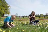 Kinder ernten, sammeln Kräuter im Frühjahr für Kräutersuppe und Wildgemüse - Salat, Wildkräuter, Ernte, Kräutersammeln, essbare Wildkräuter, Wiesen-Schaumkraut, Cardamine pratensis (Frank Hecker)
