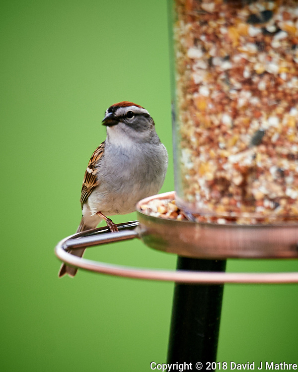 Chipping Sparrow at the Bird Feeder. Image taken with a Nikon D4 camera and 600 mm f/4 VR telephoto lens. (David J Mathre)
