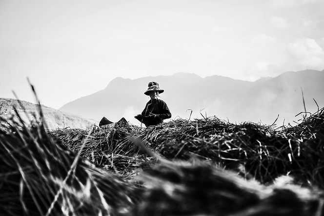 A woman rest momentarily while harvesting rice near Sapa, northern Vietnam. (Quinn Ryan Mattingly)