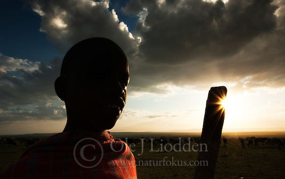 Masai boy looking after the cows in Masai Mara, Kenya (Ole Jørgen Liodden)