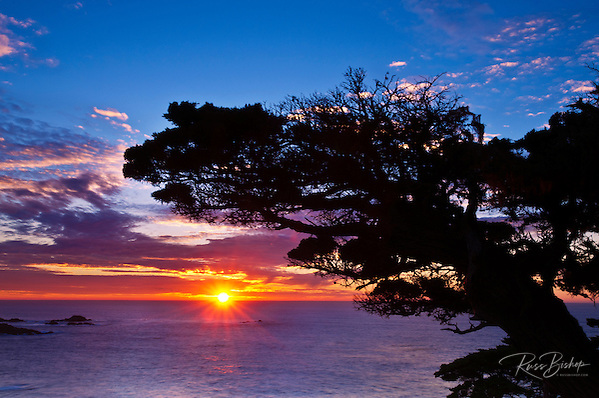 Cypress Tree (Cupressus macrcarpa) at sunset, Point Lobos State Reserve, Carmel, California USA (Russ Bishop/Russ Bishop Photography)