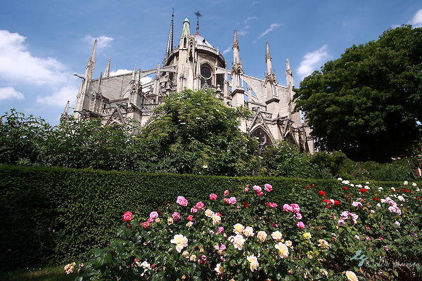 The Notre Dame, Paris, France (Elisa Sherman)