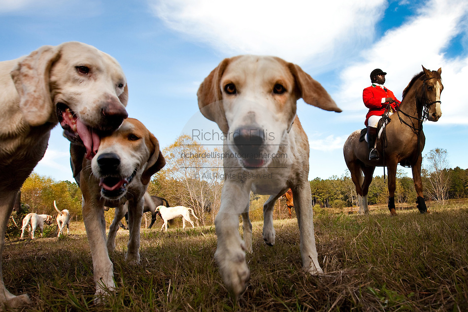 Charleston Fox Hunt Season Begins