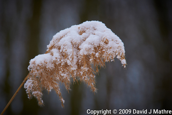Winter Grass with Snow. Sourland Mountain Preserve. Nikon D300 18-200 mm f/3.5-5.6 VR lens (ISO 200, 200 mm, f/7.1, 1/200 sec) (David J Mathre)