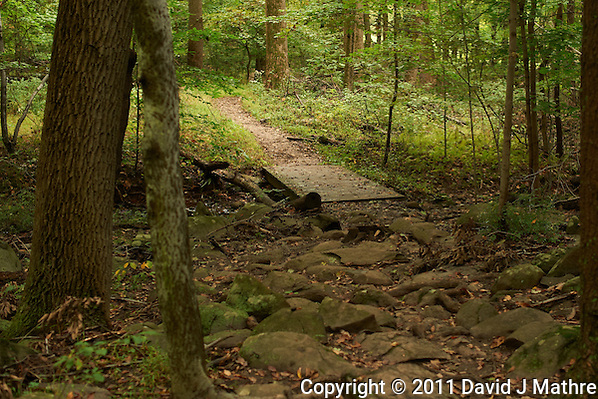 Sourland Mountain Preserve Trail. Worldwide Photo Walk 2011. Autumn in New Jersey. Image taken with a Nikon D3s and 50 mm f/1.4G lens (ISO 200, 50 mm, f/2.8, 1/100 sec). (David J Mathre)