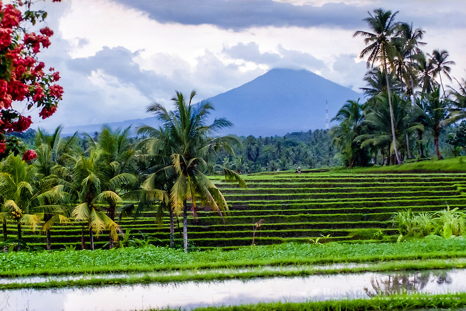 Bali, Tabanan, Kerambitan. Gunung Batukau seen from Kerambitan. Usually the mountain is covered by clouds. (Photo Bjorn Grotting)
