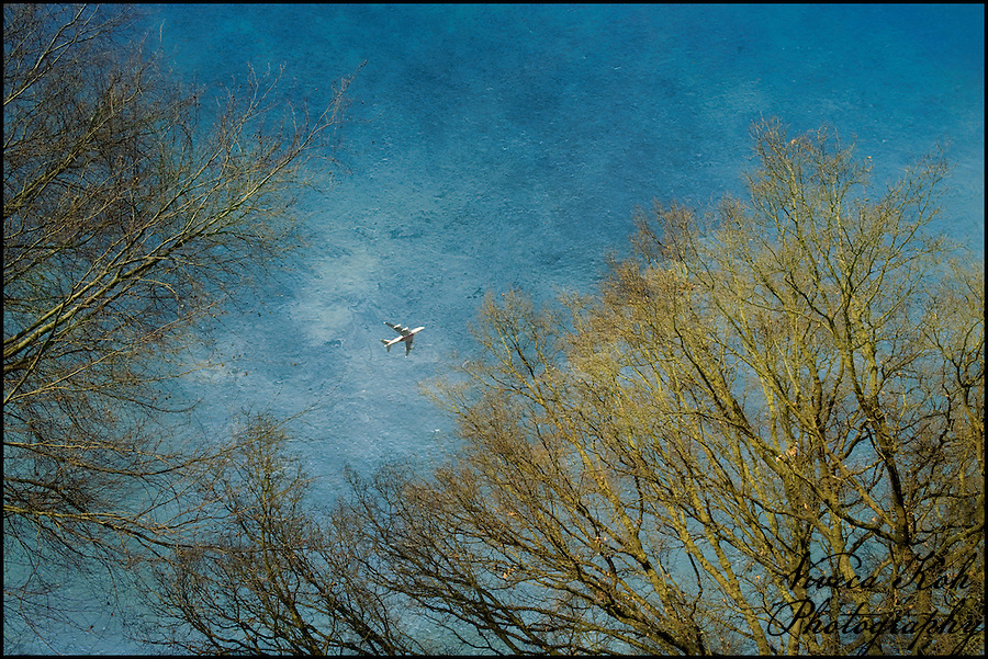 Aeroplane and trees in Richmond Park (Viveca Koh)