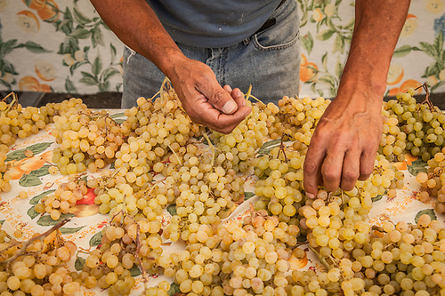 Lucio Ortez arranges white grapes at the Rojas Family Farm booth at the Calistoga Saturday Market. (Clark James Mishler)