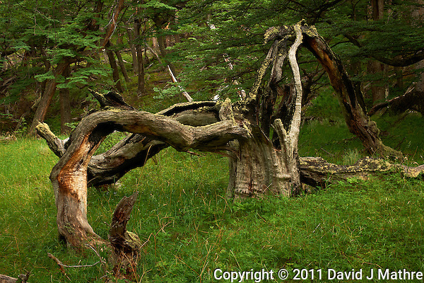 Remains of a Tree Struck by Lightning in Patagonia. Hike from Hosteria El Pilar in El Chalten to El Mirador and Laguna Torre. Image taken with a Nikon D3x and 50 mm f/1.4G lens (ISO 100, 50 mm, f/11, 1/8 sec). Day 7 of a Photography workshop in Patagonia workshop with Thom Hogan. . (David J Mathre)
