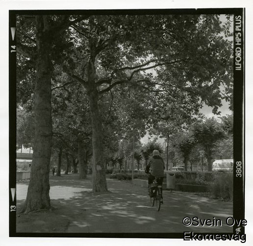 Syklist ved Rhinen. Straight fremkalling. Foto: Svein Ove Ekornesvåg (Svein Ove Ekornesvåg)