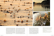 Magazine natur 07/2012 publishes Solvin's story on Tisza blooming (Tiszavirágzás). It is when millions of long-tailed mayflies (Palingenia longicauda) are rising in huge clouds, reproduce, and perish, all in just a few hours. (Solvin Zankl)