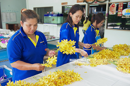 SAMUT SONGKRAM, THAILAND - MAY 22, 2009: Unidentified women work at the orchid farm in Samut Songkram, Thailand. (Dmitry Chulov)