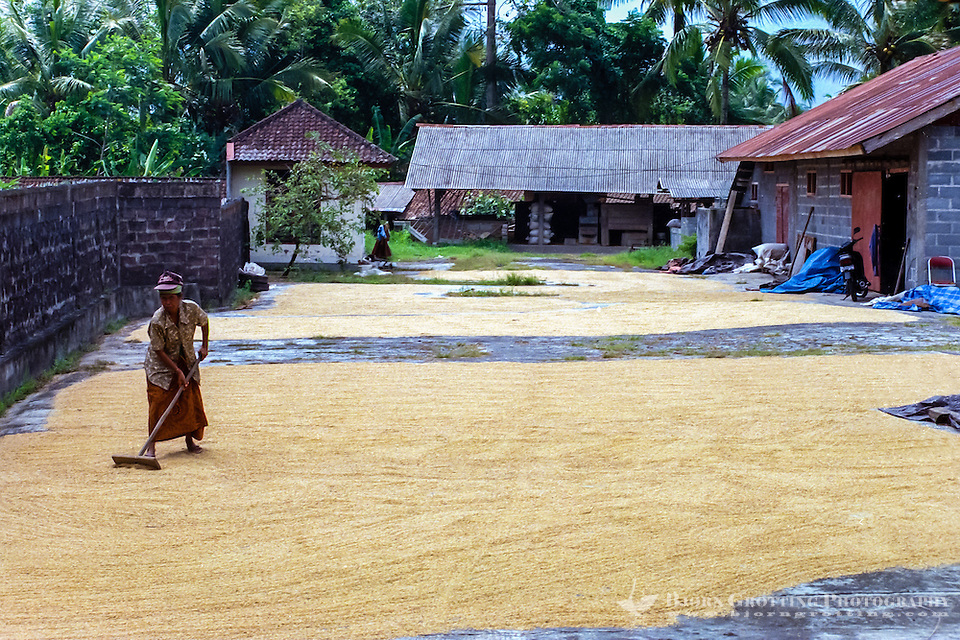 Bali, Badung, Perean. A small village south of Bedugul. The rice harvest is spread out and dried in the sun. (Photo Bjorn Grotting)