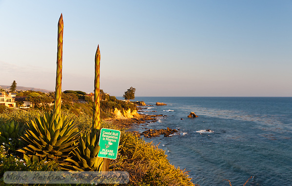 Two flowering agaves on the bluffs at Little Corona Beach, seen just before sunset.  I love the combination of classic California coastal bluffs in the background and the inflorescences in the foreground.  However, I don't like the sign in the foreground ... (Marc C. Perkins)