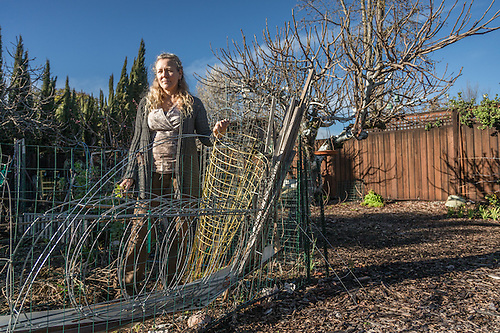 Calistoga master gardener Rachelle Benney begins work in her vegetable garden. (Clark James Mishler)