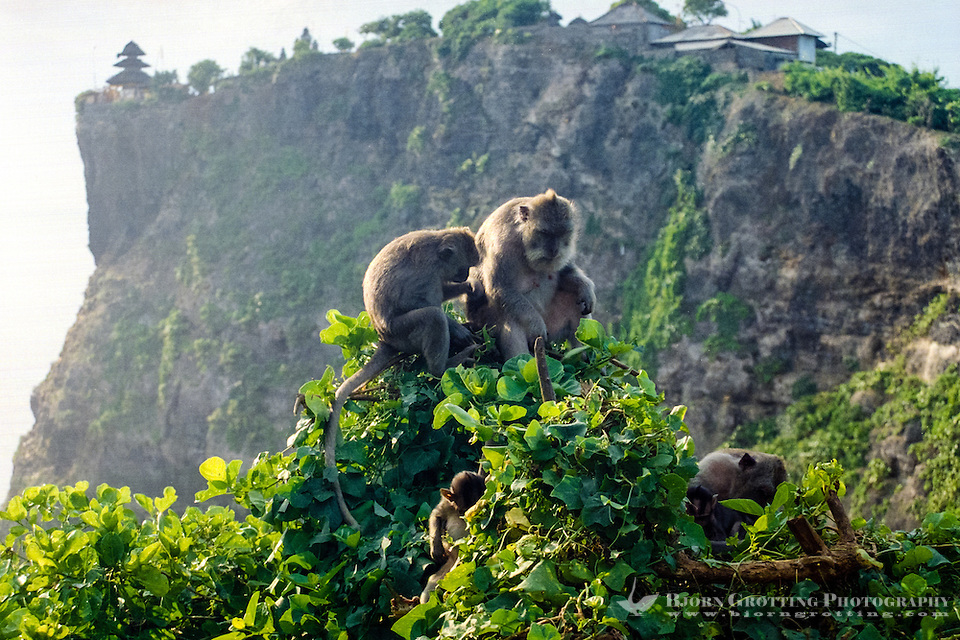 Bali, Badung, Uluwatu. The monkeys at Uluwatu are entertaining, but watch your belongings! The temple in the background. (Bjorn Grotting)