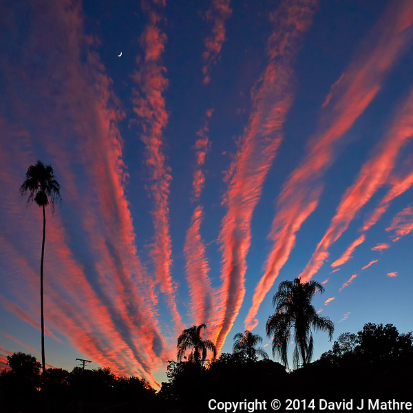 Moon, Palm Tree Silhouettes, and Orange Contrail Clouds at Sunset in St. Petersburg, Florida. Image taken with a Leica T camera and 11-23 mm wide-angle zoom lens (ISO 400, 18 mm, f/6.4, 1/640 sec). (David J Mathre)