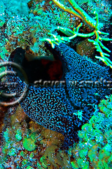 Black ball sponge, Little Tunnels, Grand Cayman (Steven Smeltzer)
