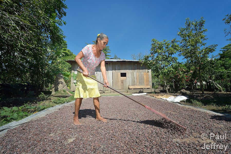 Doris Maria Trillos rakes cacao drying in the sun outside her home in Garzal, Colombia. People in this community have struggled for years to stay on their land, despite threats and violence from drug traffickers and paramilitaries. (Paul Jeffrey)