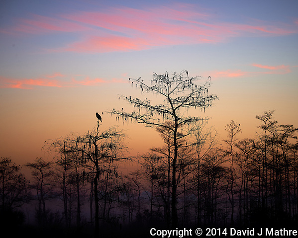 Crow Waiting For the Sun at Big Cypress Swamp National Preserve in Florida. Image taken with a Nikon Df camera and 80-400 mm VRII lens (ISO 100, 160 mm, f/8, 1/20 sec). (David J Mathre)
