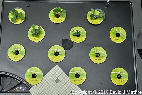 AeroGarden Farm 3 Right. at 10 days. Cauliflower, Kale, Cilantro, Oregno, Rosemary, Thyme. Image taken with a Leica TL-2 camera and 35 mm f/1.4 lens. (DAVID J MATHRE)