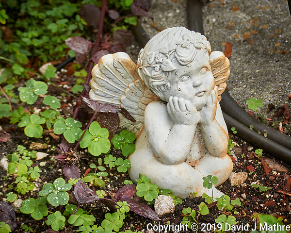 Garden Angel. Image taken with a Nikon 1 V3 camera and 70-300 mm VR lens (ISO 200, 70 mm, f/4.5, 1/400 sec). (DAVID J MATHRE)
