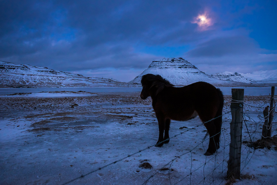 GRUNDARFJOROUR, ICELAND - CIRCA MARCH 2015: Icelandic horse at night near Grundarfjordur in Iceland against Kirkjufell mountain, a landmark in the Snaefellsness Peninsula. (Daniel Korzeniewski)