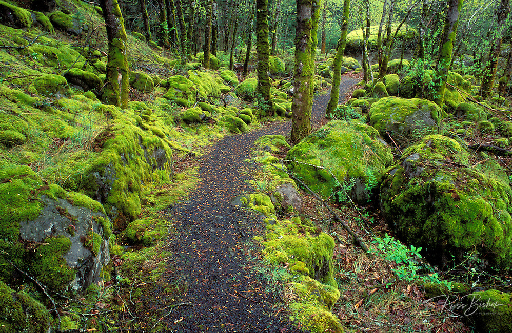 Trail through moss covered forest, Fort Cascade National Historic Site, Washington