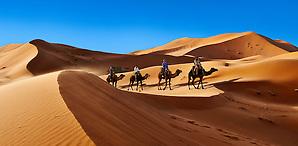 Camel rides on the Sahara sand dunes of erg Chebbi, Morocco, Africa (Paul E Williams)