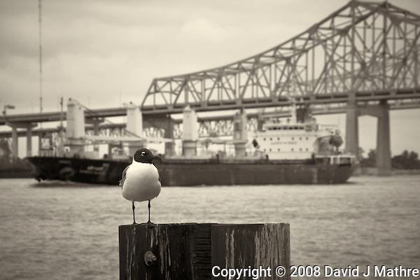 Seagull, Dusita Naree, and Bridge along the Mississippi River in New Orleans, Louisiana. Image taken with a Nikon D300 and 18-200 mm lens (ISO 200, 90 mm, f/11, 1/125 sec). Processed with Capture One Pro (including conversion to B&W). (David J Mathre)