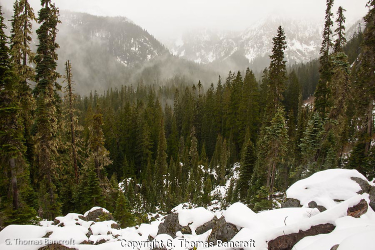 Fog rose from the subalpine firs and twisted and turned, dancing like a ballerina down the valley. (G. Thomas Bancroft)
