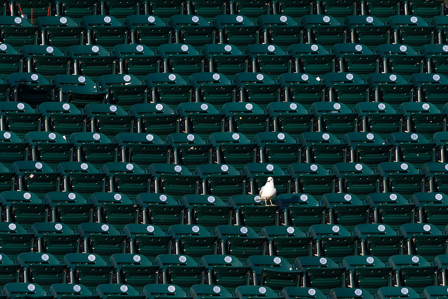 May 24, 2014; Detroit, MI, USA; Lone sea gull sits in the stand during the ninth inning of the game between the Detroit Tigers and the Texas Rangers at Comerica Park. Mandatory Credit: Rick Osentoski-USA TODAY Sports (Rick Osentoski/Rick Osentoski-USA TODAY Sports)