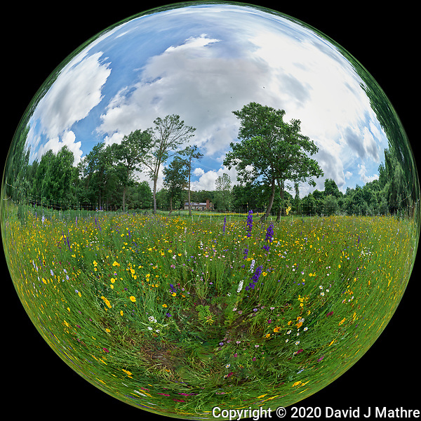 Summertime Dreams -- Backyard Wildflower Meadow. Composite of 27 images taken with a Leica SL2 camera and 16-35 mm lens (ISO 400, 16 mm, f/16, 1/125 sec). Raw images processed with Capture One Pro and AutoPano Giga Pro. (DAVID J MATHRE)