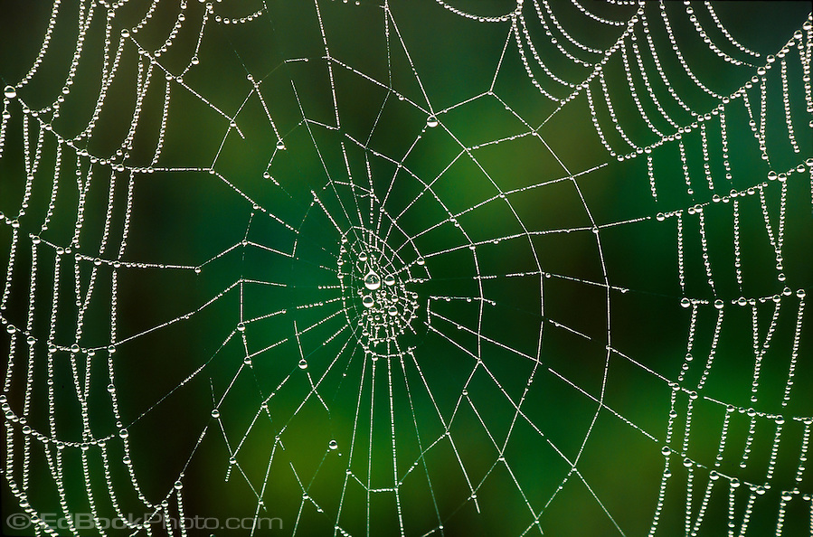 spider web covered with droplets of dew in early morning at Cade's Cove in Great Smokey Mountains National Park, TN, USA (Ed Book/©2004 Ed Book)