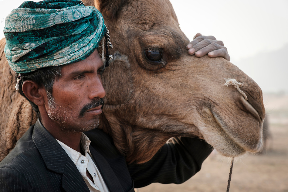 PUSHKAR, INDIA - CIRCA NOVEMBER 2016: Portrait of herder and camel in the Pushkar Camel Fair grounds. It is one of the world's largest camel fairs. Apart from the buying and selling of livestock, it has become an important tourist attraction. (Daniel Korzeniewski)