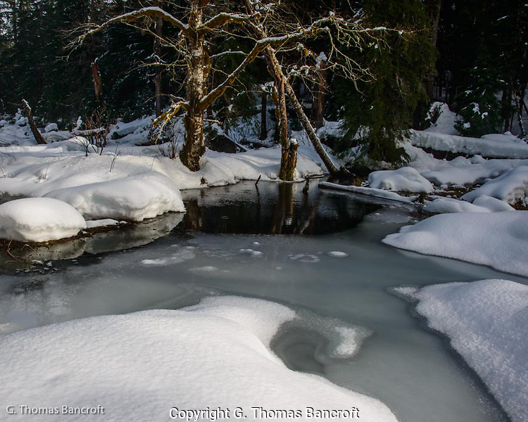 A steller's jay flew into this spot as I was looking and hopped along the edge of the ice taking a drink from the open water.  I was intrigued by the reflection in the open water and on the ice.  The deep snow framed the pond. (G. Thomas Bancroft)