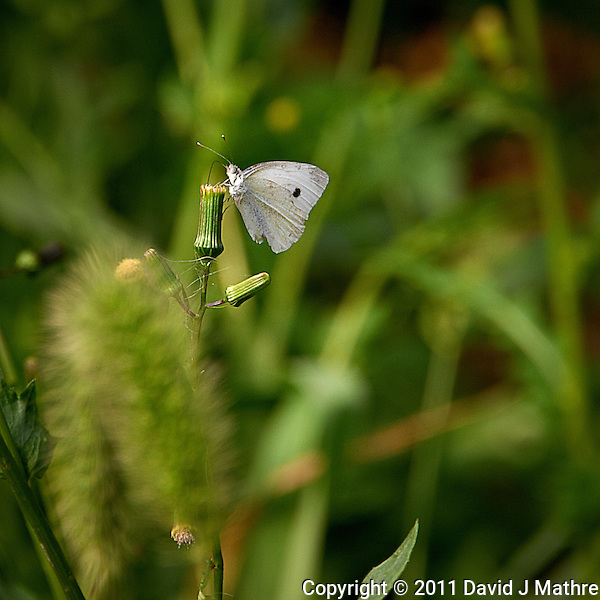 White Moth. Summer in New Jersey. Image taken with a Nikon D700 and 28-300 mm VR lens (ISO 200, 300 mm, f/8, 1/160 sec). (David J Mathre)