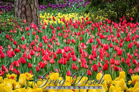 Garvan Woodland Gardens is the botanical garden of the University of Arkansas located in Hop Springs Arkansas and the Ouachita Mountains. (Greg Disch gdisch@gregdisch.com)