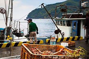 Crab harvest, fisherman, Hedo Port, Izu Peninsula, Japan (Daryl L. Hunter/© Daryl L. Hunter)