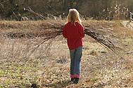 Kind, Mädchen trägt Weidenruten, Weidenzweige im Bündel, die von einer Kopfweide abgeschnitten wurden (Frank Hecker)